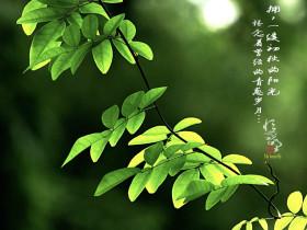 瑜伽八支,瑜伽人的精进之路|阿斯汤加瑜伽(Ashtanga Yoga)第一序列学习与实践笔记(九)