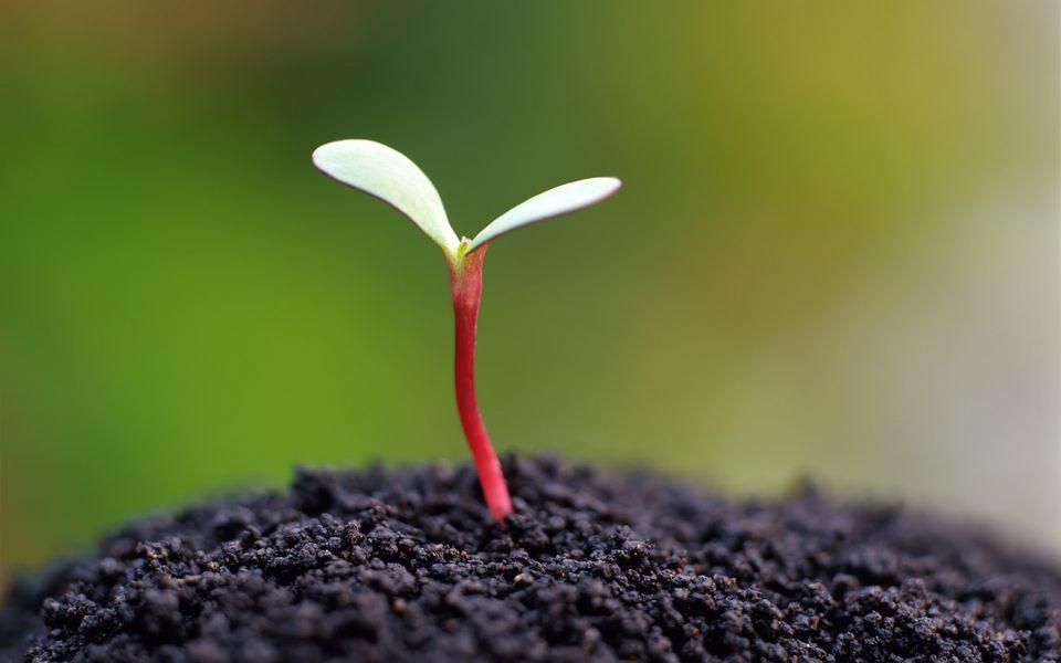自律的春夏秋冬|阿斯汤加瑜伽(Ashtanga Yoga)第一序列学习与实践笔记(七)